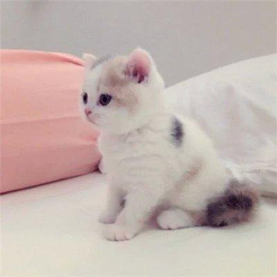 搜索可爱小猫头像